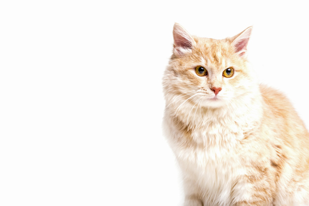 Why did the cat stop eating dry food?