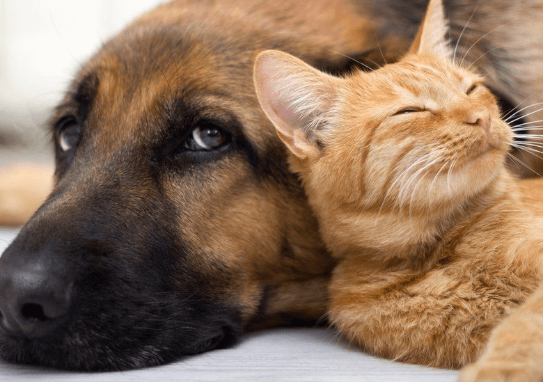 How to keep a pet healthy while traveling?